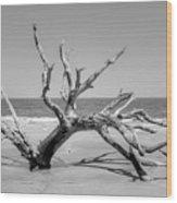 Driftwood Beach In Black And White Wood Print