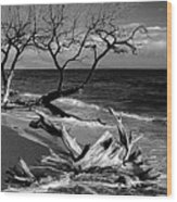 Driftwood Bw Fine Art Photography Print Wood Print