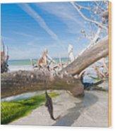 Driftwood C141352 Wood Print