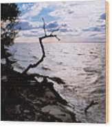 Driftwood Dragon-barnegat Bay Wood Print