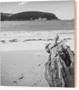 Driftwood On Beach Black And White Wood Print