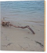 Driftwood On Ocean Beach Wood Print