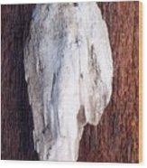 Driftwood Shell Wood Print