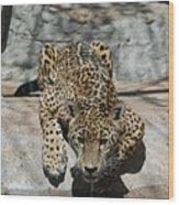 Drinking Jaguar Wood Print
