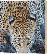 Drinking Leopard Wood Print