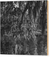 Drippin With Spanish Moss At Middleton Place Wood Print