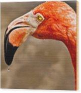 Dripping Flamingo Wood Print