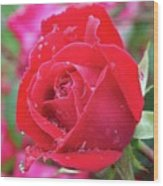 Dripping In Beauty - Double Knock Out Rose Wood Print
