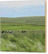 Driveby Shooting No.17 Cows Wood Print