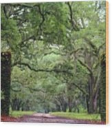 Driveway To The Past Wood Print