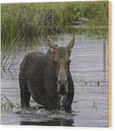 Drooling Cow Moose Wood Print