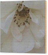 Drooping Rose Wood Print