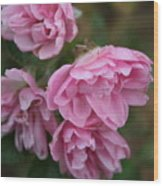 Droopy Pink Roses Wood Print