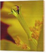 Drop On Flower Stalk Wood Print