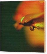 Droplet Off A Rose Petal Wood Print