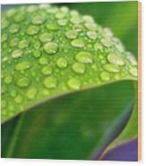 Droplets Of Hope Wood Print