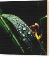 Droplets Of Water Wood Print
