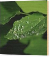 Droplets On A Leaf  Wood Print