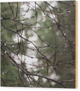 Droplets On Branches Wood Print