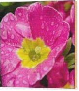 Droplets On Flower Wood Print