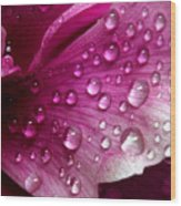 Droplets On Peony 1 Wood Print