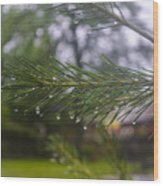 Droplets On Pine Branch Wood Print