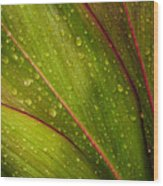 Droplets On Ti Leaves Wood Print