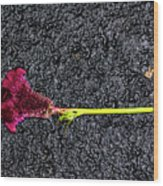 Dropped Flower Wood Print