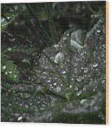 Drops And Leaf Wood Print