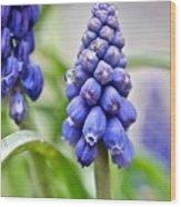 Drops Met Hyacinth Wood Print