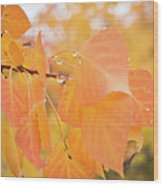 Drops Of Autumn Wood Print