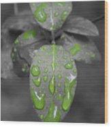 Drops Of Color 1 Wood Print