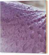Drops Of Pink Wood Print