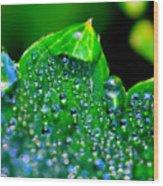Drops On Leaf Wood Print