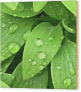 Drops On Leaves Wood Print by Carlos Caetano