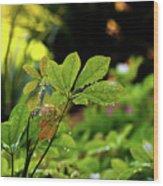 Drops On Plants After Morning Rain Wood Print