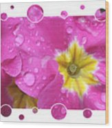 Bubbly Pink Raindrops  Wood Print