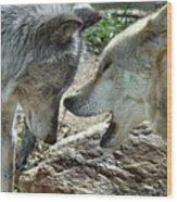 Druid Pack Yellowstone Wood Print
