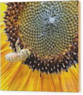 Drunken Bee Wood Print