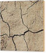 Dry Cracked Earth And Green Leaf Wood Print