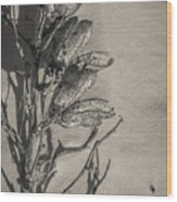 Dry Desert Wood Print