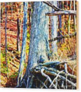 Dry Docked Wood Print by Susie Weaver