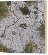 Dry Ground Wood Print