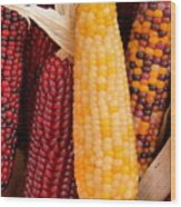 Dry Indian Corn Wood Print