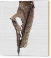 Dry Leaf Wood Print