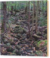 Dry River Bed- Autumn Wood Print
