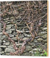 Dry Stone Wall And Vine Wood Print