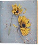 Dry Sunflowers On Blue Wood Print