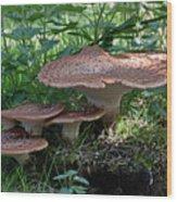 Dryad's Saddle Fungus Wood Print
