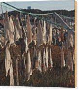 Drying Pieces Of Salt Cod In Bonavista, Nl, Canada Wood Print